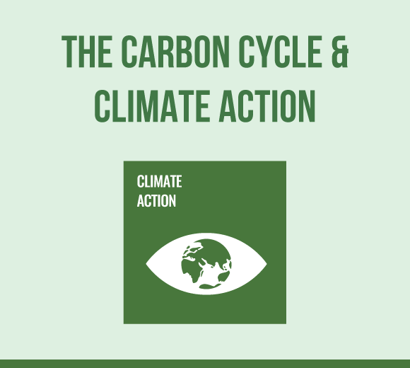 Science-Carbon Cycle